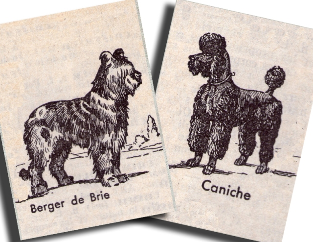 vintage french dog illustrations