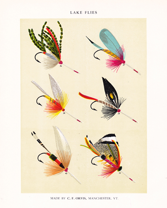 c. f. orvis fly fishing print