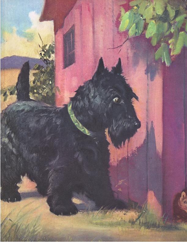 208_terrier_1955 copy