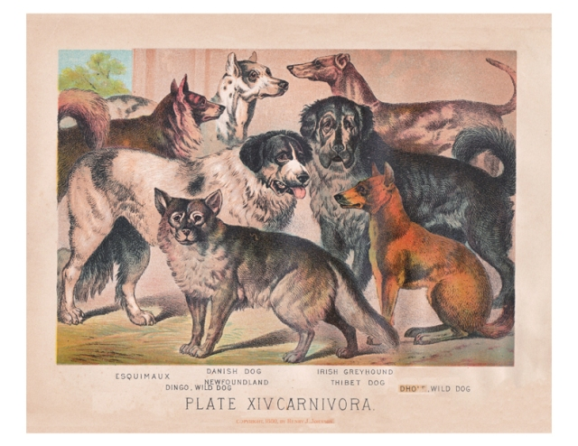 Henry J Johnson color lithograph of dogs