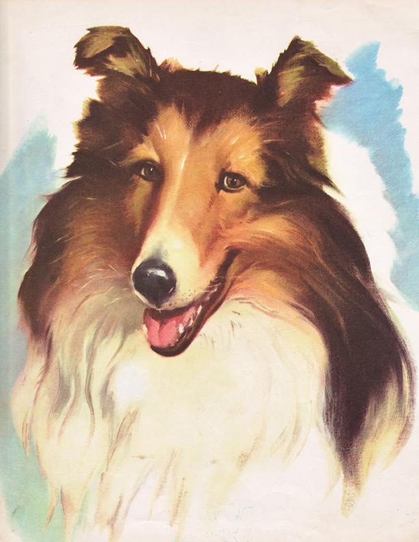 Wesley Dennis collie illustration