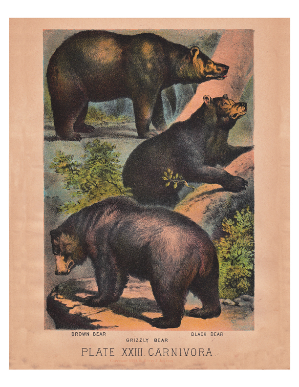 antique color lithograph of bears by Henry Johnson