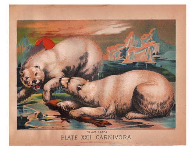 antique color lithograph of Polar Bears by Henry J. Johnson