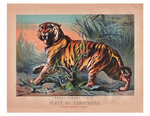 antique tiger print