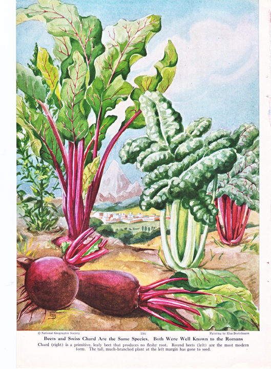 beets and swiss chard
