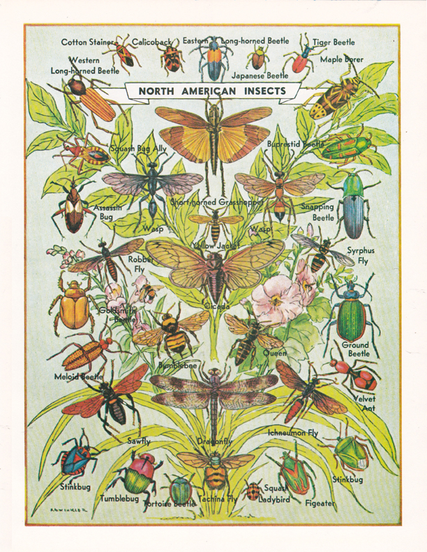 North American Insects illustration by R.H. Winkler