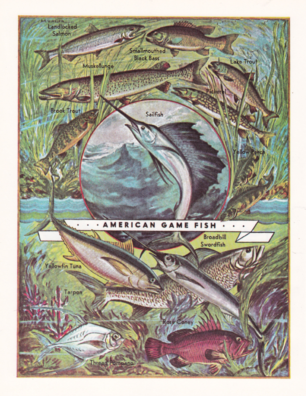 American Game Fish illustration by R.H. Winkler