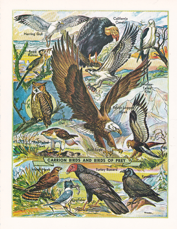 Carrion Birds and Birds of Prey illustration by R.H. Winkler