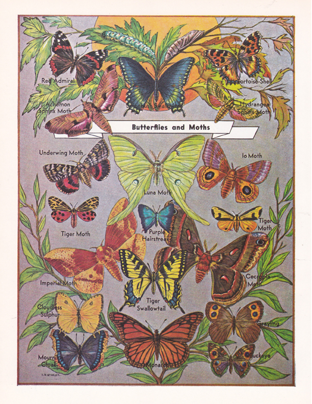 Butterflies and Moths illustration by R.H. Winkler