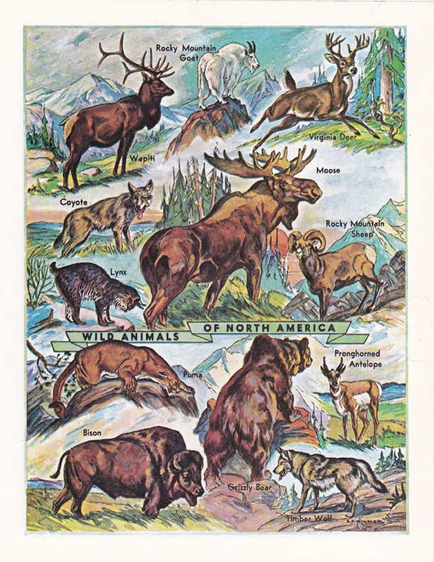 Wild Animals illustration by R. H. Winkler