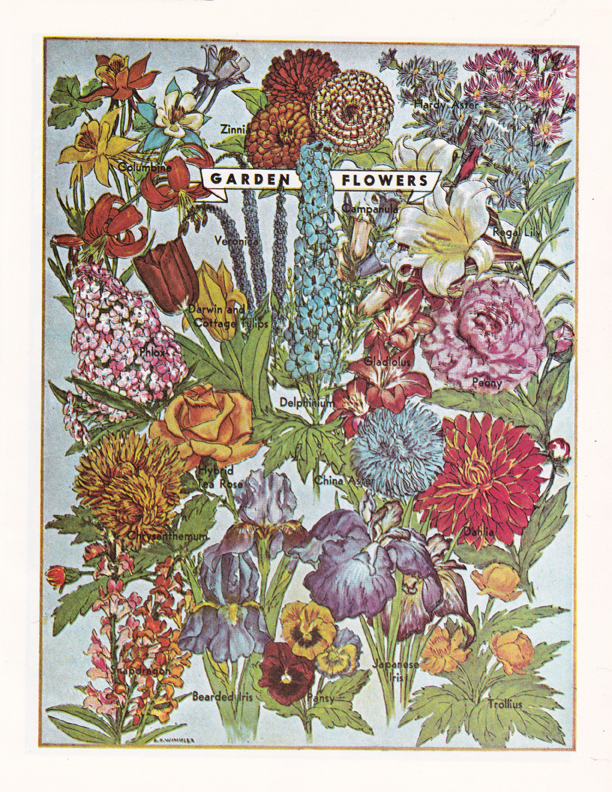 Garden Flowers illustration by R.H. Winkler