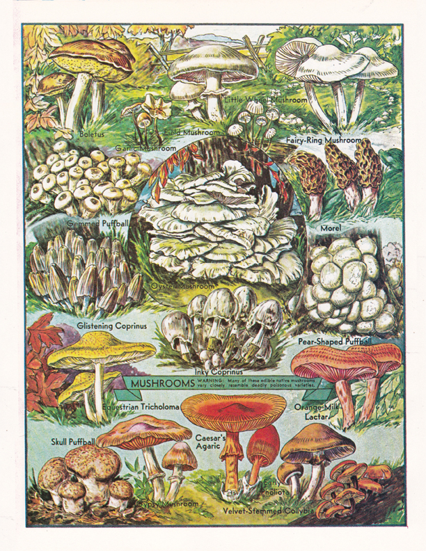 Mushrooms illustration by R.H. Winkler