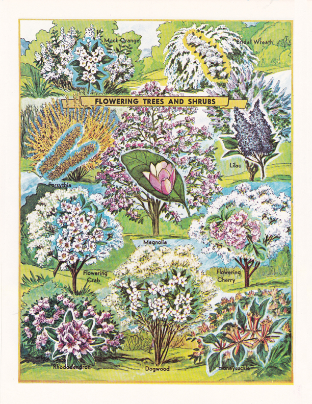 Flowering Trees and Shrubs illustration by R.H. Winkler
