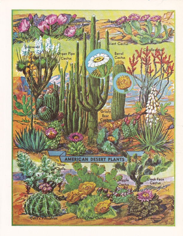 American Desert Plants illustration by R.H. Winkler