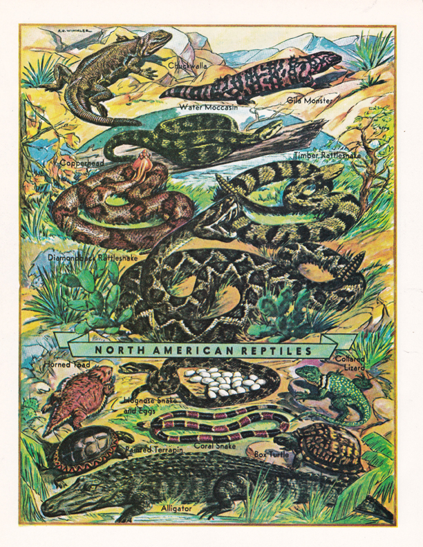 North American Reptiles illustration by R.H. Winkler