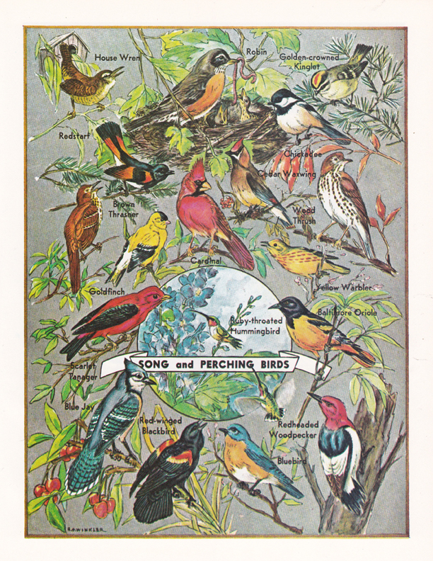 Song and Perching Birds illustration by R.H. Winkler