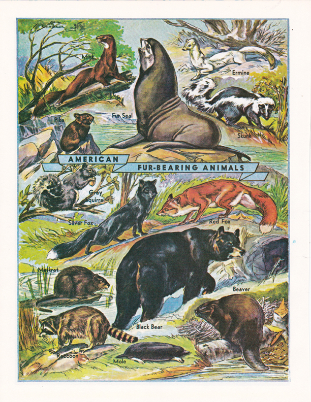 American Fur-Bearing Animals illustration by R.H. Winkler