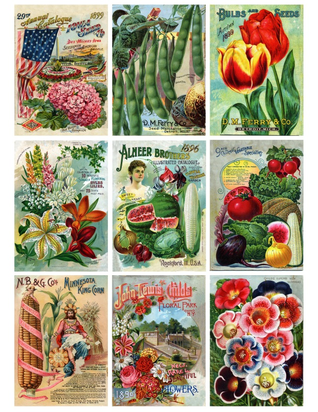 Iowa Seed Company