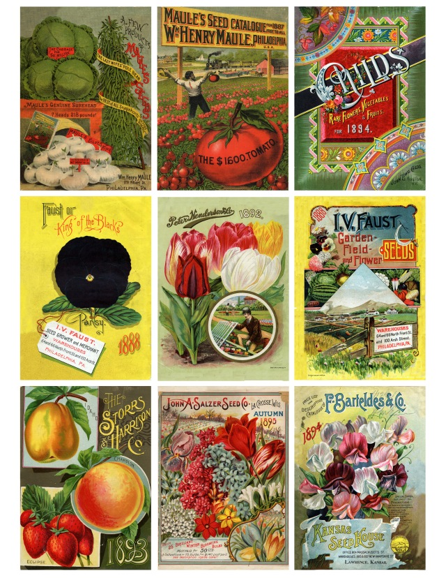 Antique Seed Packaging