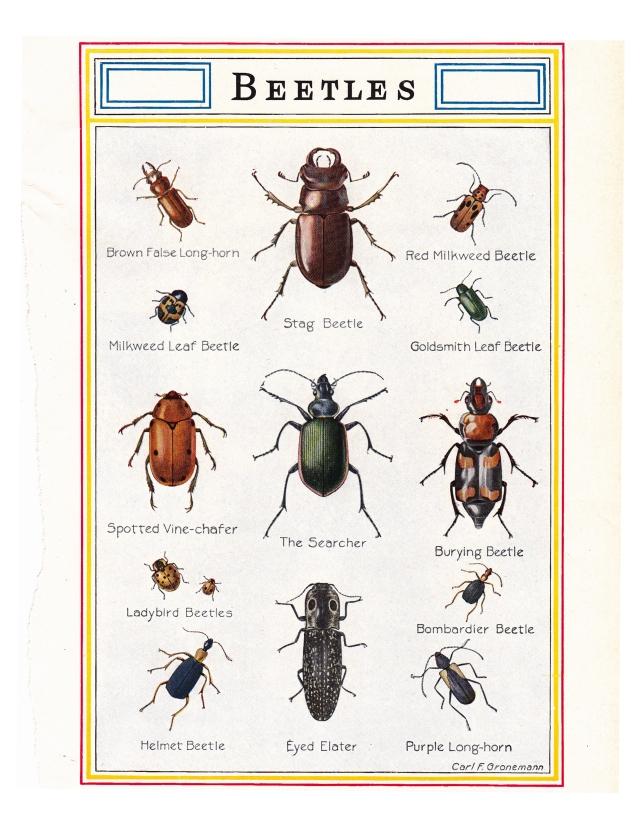 841_beetles_7x10