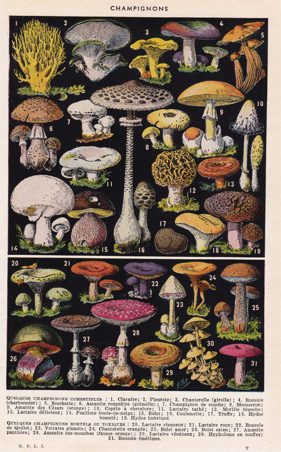 mushrooms_570