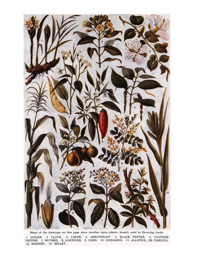 449_botanical